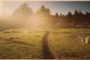 Jessica Sequoia National Park 1995 meadow