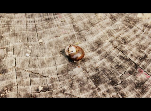 snail closed