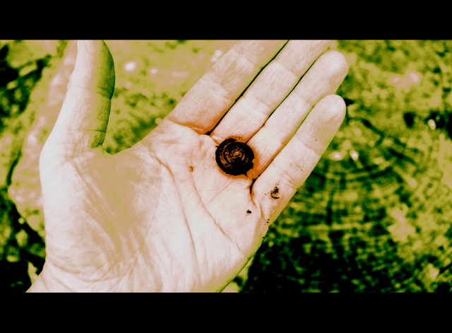 snail in palm