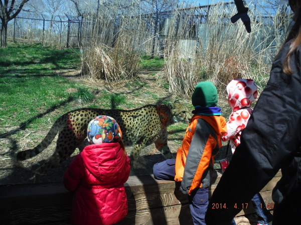 cheetah at baltimore zoo