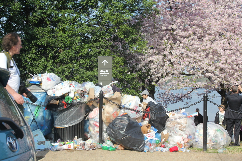 cherry blossom mound of trash