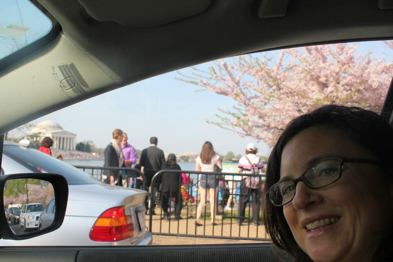 cherry blossom  self portrait from car
