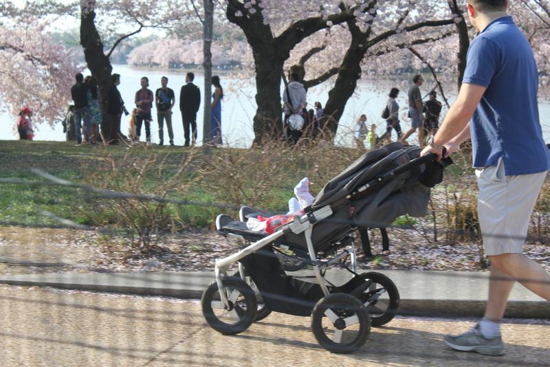 cherry blossom  stroller