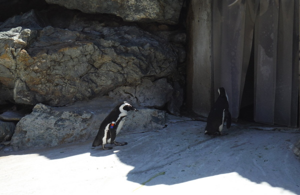 penguins at baltimore zoo