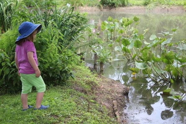 contemplative preschooler - lotus Kenilworth gardens