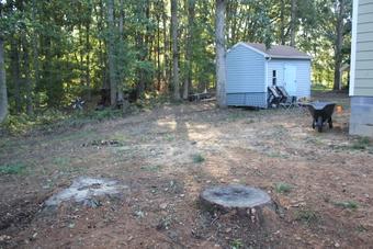 shed in back yard renovation