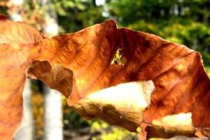 Fall leaves 10-24-15