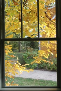 Fall leaves 10-24-15 window