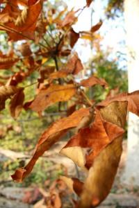 Fall leaves2 10-24-15