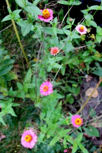 fall flower all stages 10-24-15
