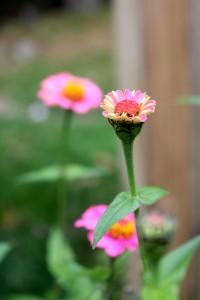 fall flower bud vertical 10-24-15