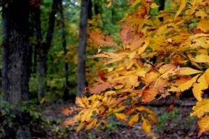 fall leaves woods 10-24-15