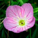 cropped-flower-by-sidewalk-512-001.jpg