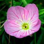 flower by sidewalk 512-001
