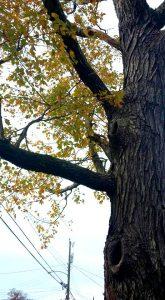 crunchychewy-mama-clouds-tree