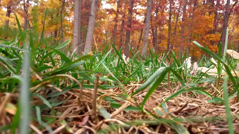 crunchychewy-mama-grass