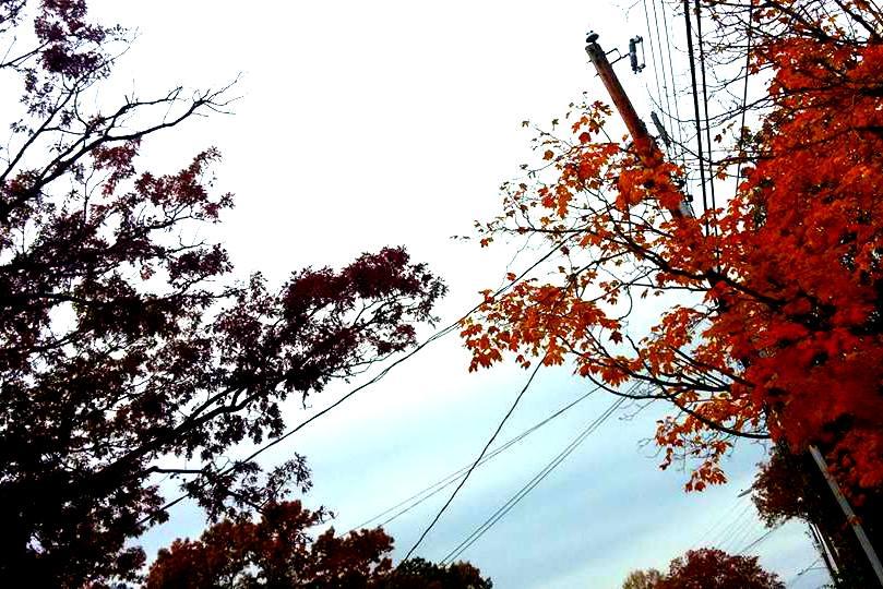 crunchychewy-mama-two-trees-reaching